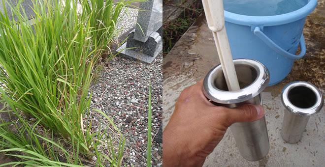 雑草/花筒洗い